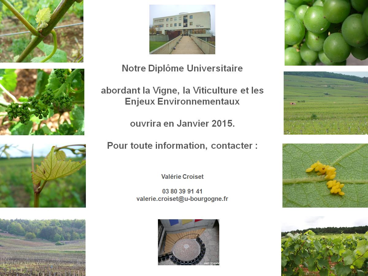 Du-Viticulture-Enjeux-Environnementaux